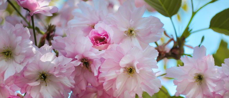 cherry-blossom-slide